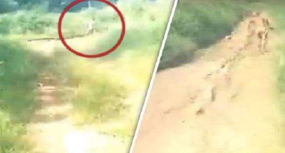 بالفيديو.. مخلوق غريب  بسمات بشرية يثير الرعب في إندونيسيا
