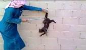 عقوبات جزائية بحق المسيئين للحيوانات بعدة مناطق في المملكة