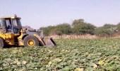 بالصور.. إزالة 6000 متر مزارع تروى بمياه ملوثة في مكة