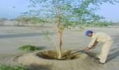 بالصور.. صيانة الحدائق وغسيل الأشجار في نجران
