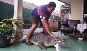 بالفيديو.. عائلة إندونيسية تربي حيوانات مفترسة في المنزل