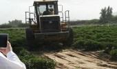 أمانة مكة تزيل 5 مزارع وتتلف محاصيل غير صحية