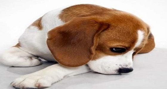 دار جنازات تستخدم كلب كطبيب نفسي لدعم أهل المتوفي