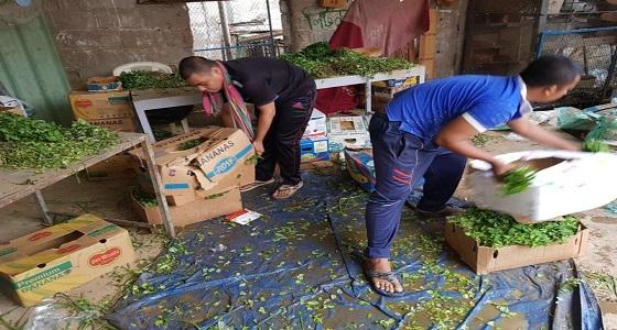 بالصور.. مصادرة 40 كرتون خضروات متعفنة قبل توزيعها في مكة
