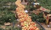 تشكيل لجنة رباعية لمراقبة المنتجات الزراعية