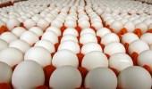 شركة تغري موظفيها الجدد بعلاوة 144 بيضة شهريًا