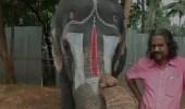 فيديو مذهل لفيل يلعب على آلة الهارمونيكا