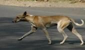 بالفيديو..كلب ضال ينقذ سيدة من السرقة