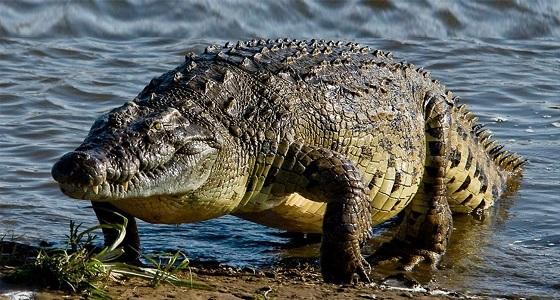 10 آلاف دولار غرامة لمزارع قتل تمساحا يلتهم ماشيته