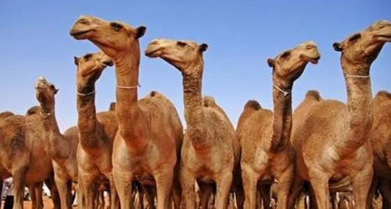""""""" الرقابة البيطرية """" : 400 ألف ريال غرامة لتجميل الحيوانات"""