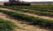 إزالة أكثر من 6000 متر مزارع غير صحية بمكة