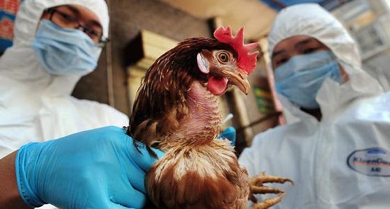 """"""" البيئة """" : حظر مؤقت لاستيراد الطيور الهندية"""