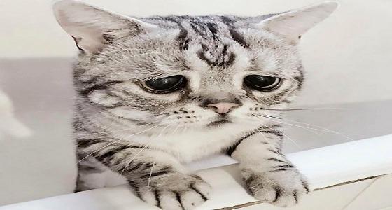 محكمة تأمر بطرد قطة من عيادة بيطرية
