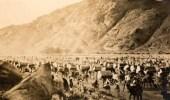 صورة نادرة للحجاج وهم يؤدون المشاعر المقدسة قبل 100 عام