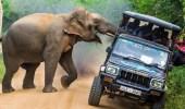 بالصور.. فيل غاضب يهاجم سيارة بحثا عن الطعام