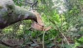 بالفيديو والصور.. جزيرة الثعابين الأكثر خطورة ودموية في العالم
