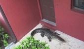بالصور.. تمساح يحتجز أسرة داخل منزلها