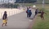بالفيديو.. كلب يلعب كرة القدم مع صاحبة بشكل رائع