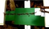 فيديو مذهل لمجموعة من النمل تقيم جسر بأجسادها