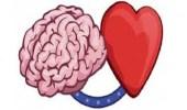 اكتشاف مناطق بالقشرة الدماغية مسئولة عن الحب