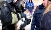 بالفيديو.. رجل إطفاء ينعش  قطة بعد إنقاذها من حريق
