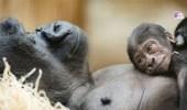 بالفيديو.. أفضل 9 آباء في عالم الحيوان