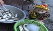 بالصور..قط يخطف الأنظار يبيع السمك في الشوارع