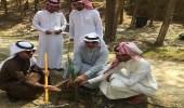 توزيع 4 ألاف شتلة على المواطنين بمحافظة بني حسن