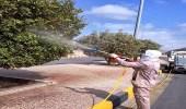 بالصور.. غسيل أشجار الشوارع والجزر الوسطية في نجران
