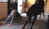 """بالفيديو..حصان يمارس """" اليوجا """" مع صديقته"""
