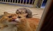 بالصور.. رد فعل طريف لقطة شاهدت حيوان البوسوم يسرق طعامها