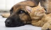 بالفيديو.. كلب وقط يوصلان للعالم معنى الرحمة