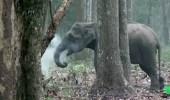 بالفيديو.. فيل يدخن في الغابة يثير ذهول المتابعين