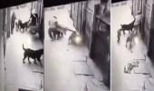 بالفيديو .. كلاب مفترسة تنهش جسد رجل