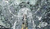 العثور على أدمغة مجمدة منذ نصف مليار سنة