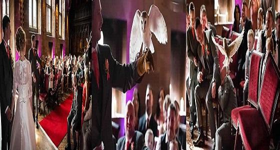 بالفيديو.. بومة تفسد حفل زفاف وتسرق الخاتم