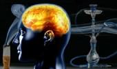 """"""" النيكوتين """" وآثاره السلبية على خلايا الدماغ"""