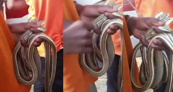 بالفيديو.. شباب يبيعون ثعابين بشكل مثير في سوق صبيا