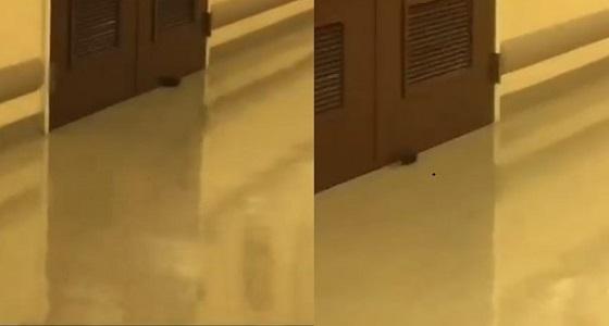 شاهد.. الفئران تتجول في ممرات مستشفى الأمير محمد بن عبد العزيز
