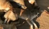 بالفيديو.. شاب يعذب الحيوانات حتى الموت بالرياض