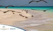 """هيئة السياحة: """" جزر فرسان """" نموذج مميز للحياة الفطرية بالمملكة"""