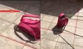 بالفيديو..ثعبان بحقيبة طالبة في عسير