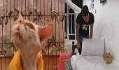 بالفيديو.. طالب طب بيطري يحول منزله لفندق قطط