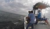 بالفيديو.. رجل متهور يصطاد سمكة قرش حاولت عضه