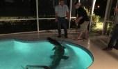 بالفيديو.. تمساح طوله 11 قدما يثير فزع أسرة أمريكية