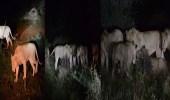 بالفيديو.. خسارة 7 أسود في مواجهة حيوان صغير