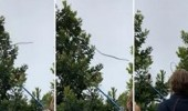 بالفيديو.. أفعى تقفز من شجرة إلى أخرى داخل مدرسة بطريقة مذهلة