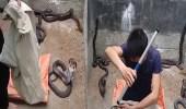 فيديو صادم لشاب يحاول السيطرة على ثعابين كوبرا سامة