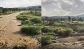 بالفيديو.. جريان وادي قنونا بالعرضيات