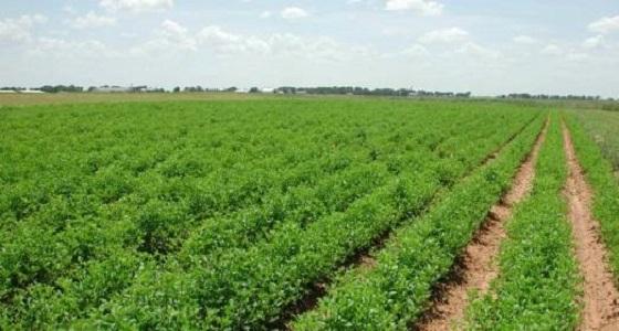 """مجلس تنسيقي بين العراق والمملكة للاستثمار بالأراضي الزراعية بـ """" الأنبار """""""